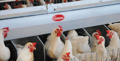 Grain, pig and poultry production systems