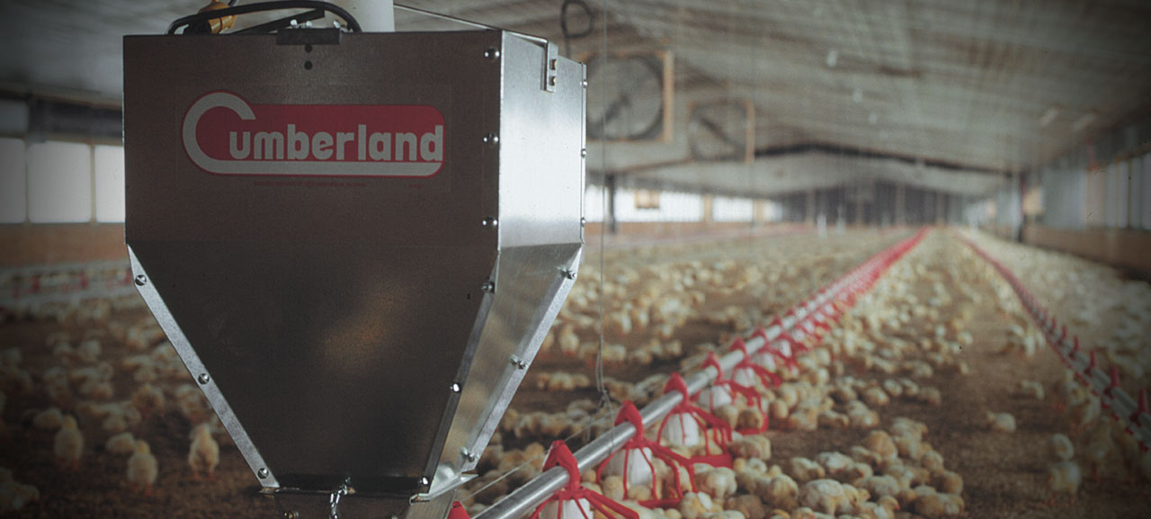Cumberland-poultry